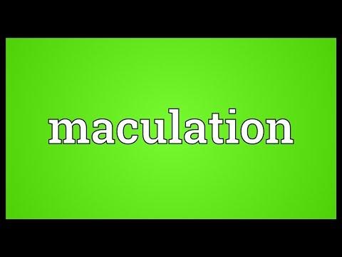 Header of maculation