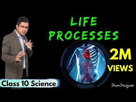 Life Processes 1 : CBSE Class 10 X Science (Biology)