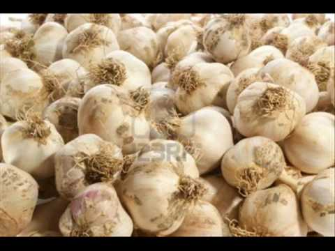 Garlic Cultivation Technology Pakistan Dr. Ashraf Sahibzada
