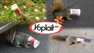 Yoplait Yogurt NEEDS to change...  - Save the Squirrels Initiative
