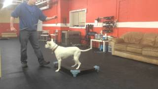 Place Command nervous dog | Solid K9 Training