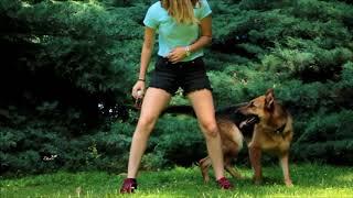 Dog Tricks    Lessie • The Mutt & Eiby • German Shepherd & Molly • The Mutt & Ceira • French Bulldog