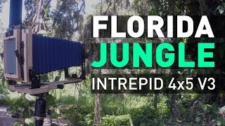 Landscape Photography: Intrepid 4x5 v3 in Florida Jungle + HP5 @1600!