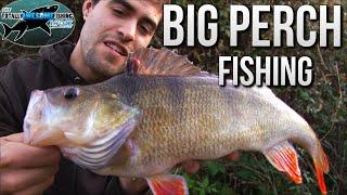 Big Perch Fishing   TAFishing