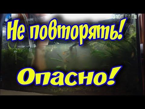 ТОТАЛЬНАЯ СИФОНКА ГРУНТА В АКВАРИУМЕ С РАСТЕНИЯМИ! НЕ ПОВТОРЯТЬ!