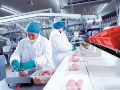 Sekrety Z Pracy; Fabryka Kurczaków (!!!)