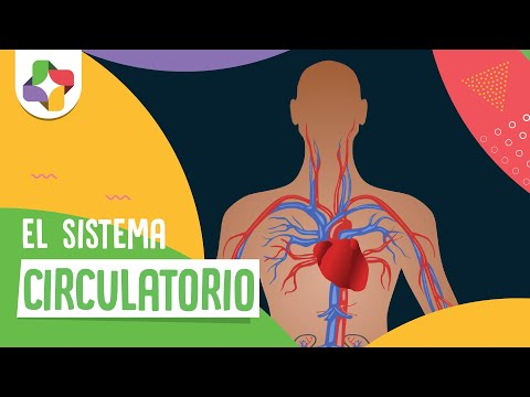El sistema circulatorio - Biología - Educatina
