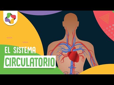 El sistema circulatorio - Biología - Educatina