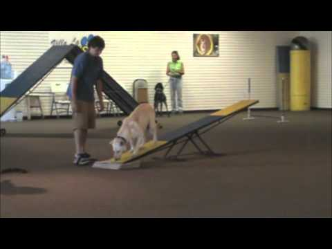 Villa La PAWS - Agility for Fun-Class2 - July 2012