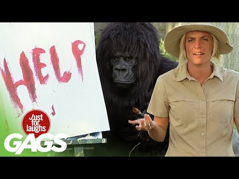 Funniest Gorilla and Mouse Pranks