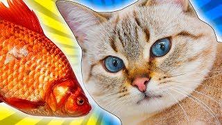 Cat Goes Fishing #1 - KATTEN FISKER IGEN