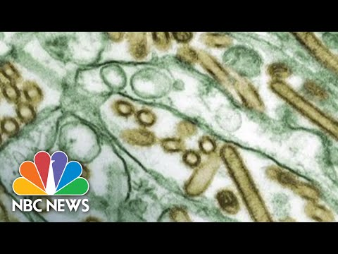 CDC Failures Expose Workers To Deadly Viruses | NBC News