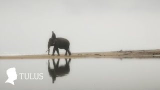 Download Lagu TULUS - Gajah (Official Music Video) Gratis STAFABAND