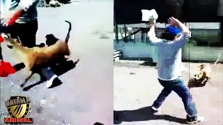Deje al Pitbull quieto o sino ! | man vs pitbull | Batalla Animal 2016