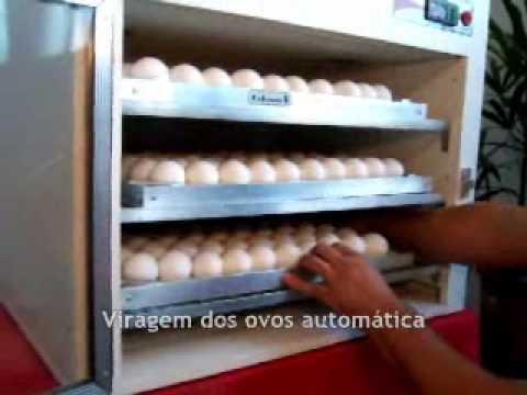 Chocadeira para ovos de galinha