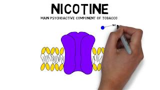 2-Minute Neuroscience: Nicotine