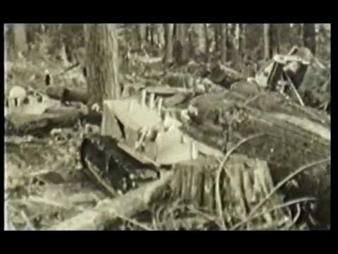Allison Logging - Coastal Logging in the early 20th Century