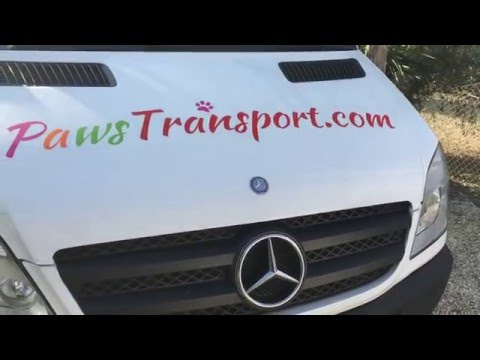 Paws Pet Transport Ltd Uk  Animal courier Spain to Uk to France 2016 Registered Uk Company