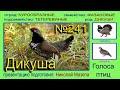 Дикуша Голоса птиц mp3