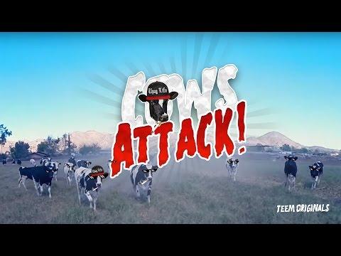 スカイダイビングで牛の群れ近くに着地して大ピンチ!!