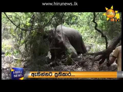 somawathi elephant t|eng