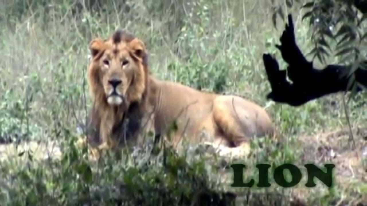 Real Animals Videos For Kids Real Animals in Zoo For Kids