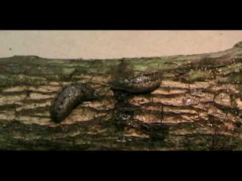 Slug Meets Snail