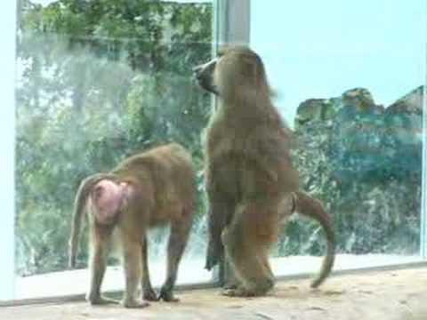 Monos en Vigo Zoo