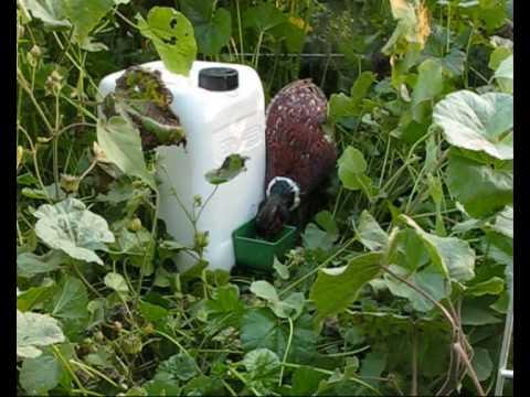 Abbeveratoio per ripopolamento youtube for Vasche da interrare per tartarughe