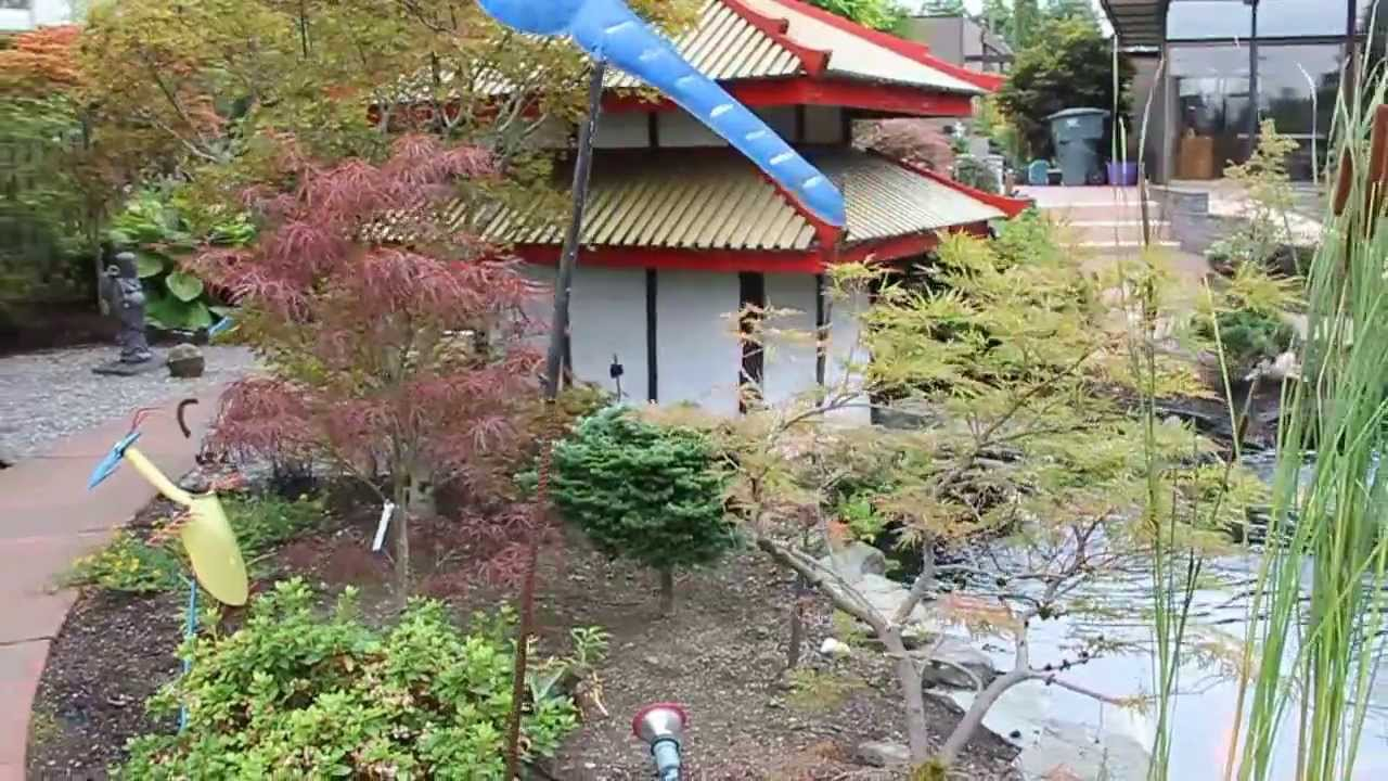 Japanese Maples Dwarf Conifers Koi Ponds And Waterfalls Aug 2013 Amazing Maples Youtube