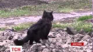 Бойовики посилюють обстріли позицій ЗСУ в Широкиному забороненою зброєю - (видео)