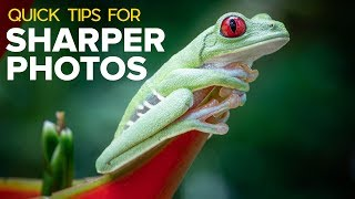 Quick Tips for Sharper Action and Wildlife Photos