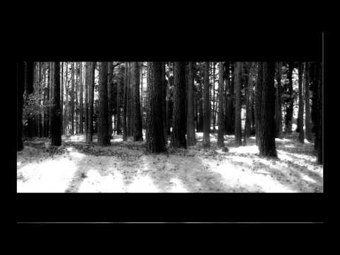 Forest Of Shadows - Open Wound