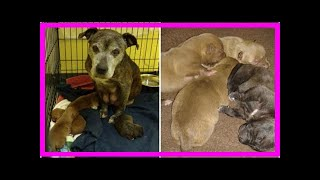 | Dog Rescue StoriesDog Abandoned During Snow Storm Shocks Rescuers By Revealing Her 4 Newborn Pu...