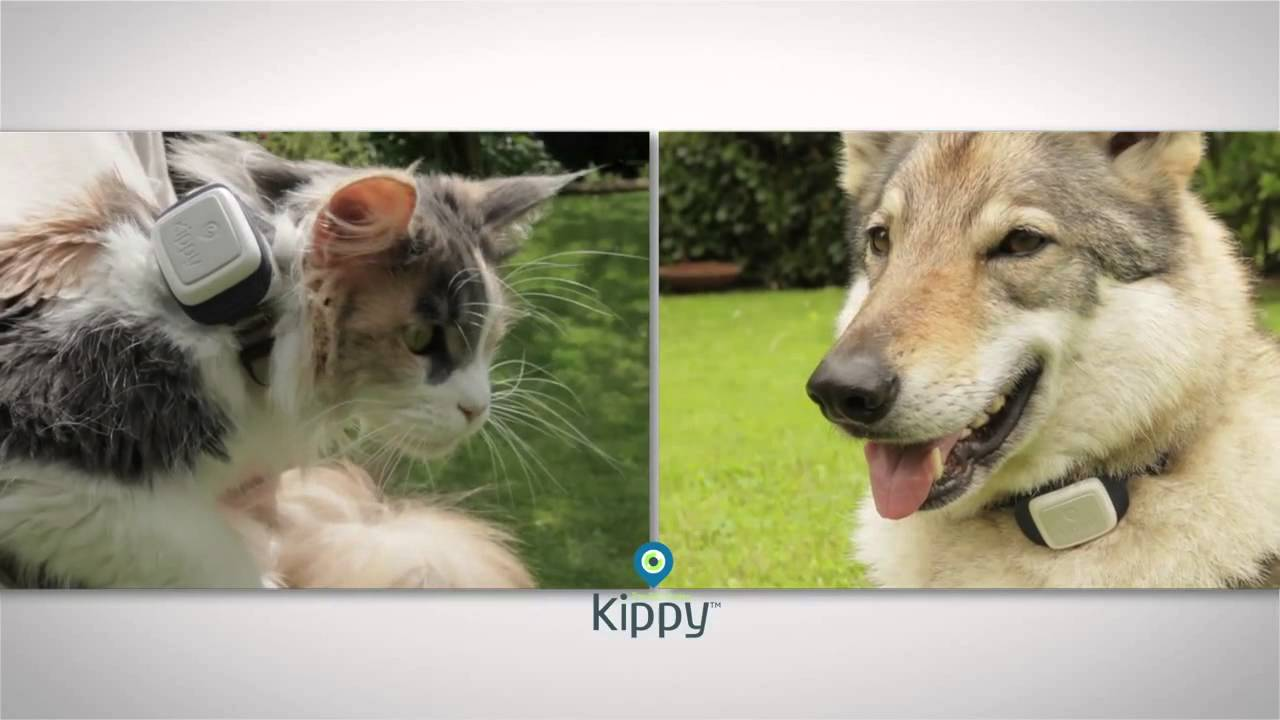 Kippy Gps Pet Tracker For Dogs And Cats