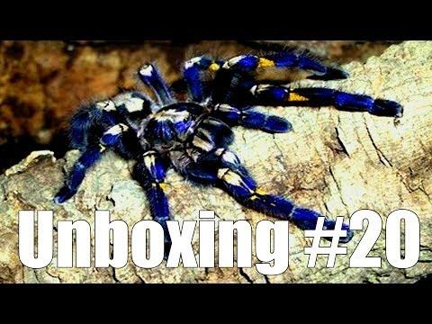 Tartan Tarantulas Unboxing #20