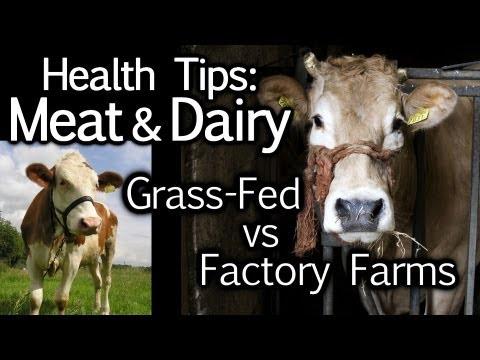 Nutrition Animal Animal Cruelty Nutrition