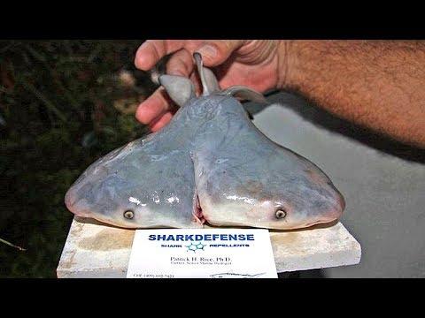 5 СТРАШНЫХ мутаций рыб снятых на камеру