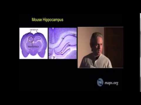 Magic Mushrooms (Psilocybin) Grows New Brain Cells