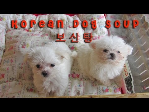 Eating Dog Soup, Korea, Bosintang ...
