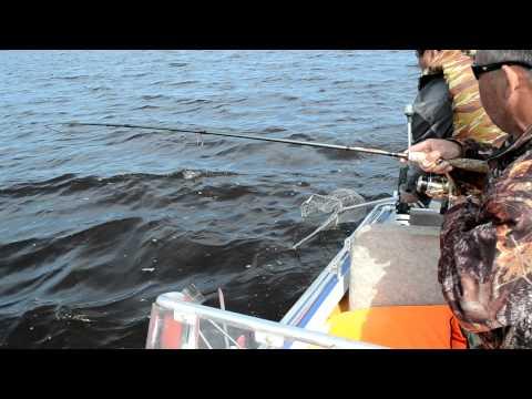 рыболовная камера судак