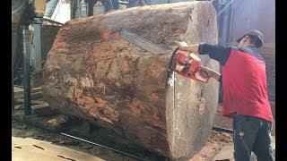Amazing Dangerous Chainsaw Skills Giant Tree - Dangerous Biggest Wood Sawmill Machine Working