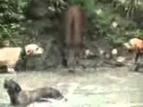 Fight Forest Hag With Dog.3gp video