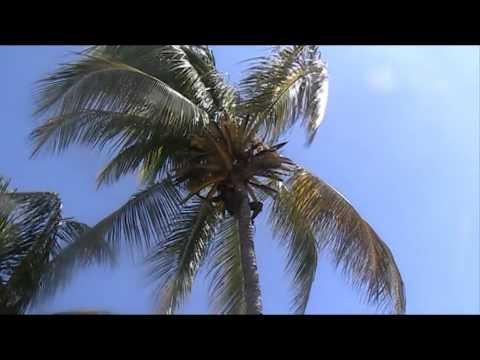 santiago de cuba , sigua coconut tree