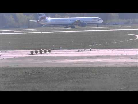 Animals running loose on airport tarmac!