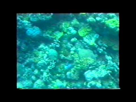 MV Quicksilver - Great Barrier Reef 1986