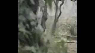 Watch Stiff Little Fingers Beirut Moon video
