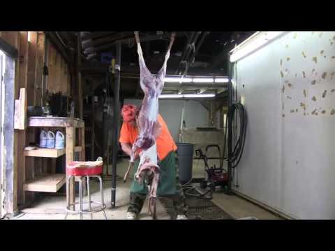 NEW World Record Deer Skinner..