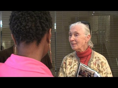 Jane Goodall warns great apes face extinction