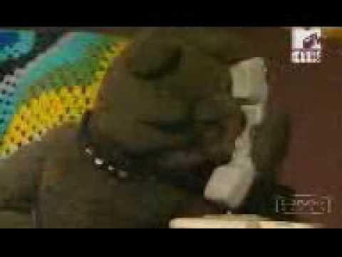 video divertenti sugli animali commentate
